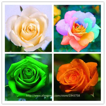 pcs  seeds    exotic  seeds  Chinese  Flower  Seeds