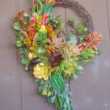 "13-14"" Cascading Willow Branch Living Succulent Wreath (size depends on size of succulent starts)"
