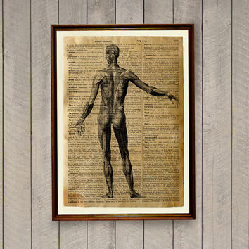 Medical illustration Rustic vintage decor Human anatomy poster