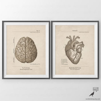Brain & Heart, 2 Print Set, Anatomy Series, Gift for Student, Bedroom Decor, Human Anatomy Prints, Vintage Inspired Anatomy Illustration
