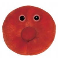 Red Blood Cell (Erythrocyte)