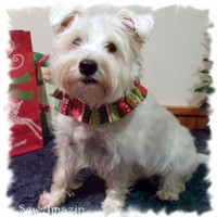 Christmas Red Green White Stripes Dots Dog Scrunchie Neck Ruffle