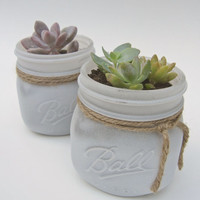 "Large 4""x 4"" Potted Succulent in White Painted Mason Jar- Shabby Chic Rustic Vintage Country- Plant/Flower Gift, Wedding/Baby Shower Favors"