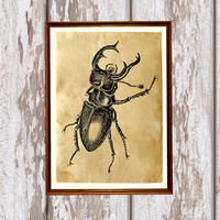 Antique art Cabin decor Stag beetle poster Insect print  AK226