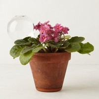 Garden Water Ball by Anthropologie Clear One Size Garden