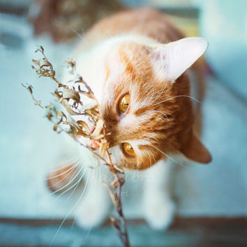 Ginger rustic cat and branch Instant Digital Download Art Photography Printable, blue and orange, for cat lovers, animal photography