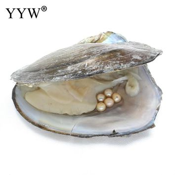 One pearl oyster with five pearls Freshwater Pearl Oyster Jewelry Beads Birthday Gifts