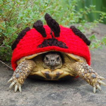 Lady Bug tortoise cozy - made to order