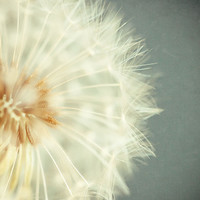 Dandelion Photograph Flower art print by LisaRussoPhotography