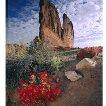 Paintbrush and the Organ Rock