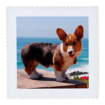3dRose Pembroke Welsh Corgi Puppy Standing on Wooden Table - Quilt Square, 8 by 8-Inch (qs_206233_3)