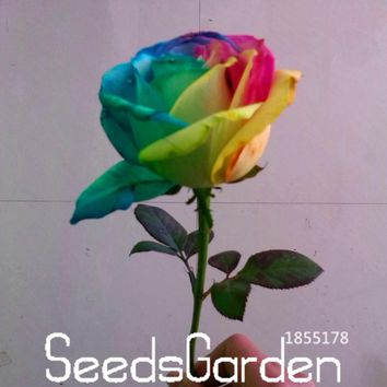 Best-Selling!150 pcs/Packet Seeds Rare Holland Rainbow Rose Flower Home Garden Rare Flower Seeds Colorful Rose Seeds,#P3KK5O