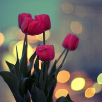 Photo Print Twilight And Bouquet Of Tulips by GoldenSection