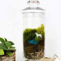 Unicorn Spotting! // Large // Terrarium