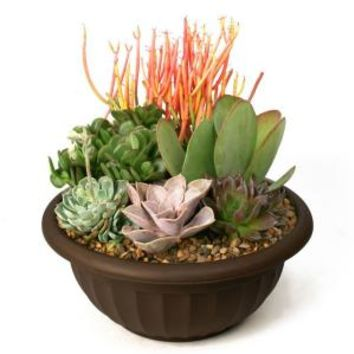 Succulent Garden Plant-Your-Own Kit, 0881011 at The Home Depot - Mobile