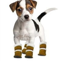 Pugz Shoes - Apparel - Shoes/Socks Posh Puppy Boutique