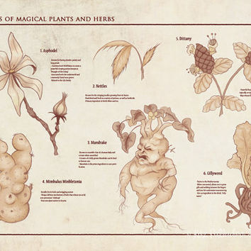 Herbology Reference- Hogwarts Magical Plants- Giclee Harry Potter Poster