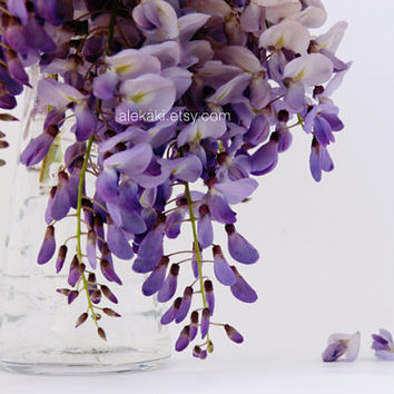 Wisteria in a vase - home decor - lilac, purple flower photo, still life photography - flower blooms