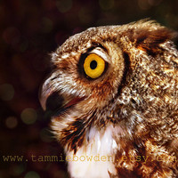 Great Horned Owl - Original Photograph - Forest Woodland Nature Decor Rustic Brown Sepia Wall Art