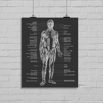 Human Body Anatomy Art Print - Anatomy Art Print - Wall Art