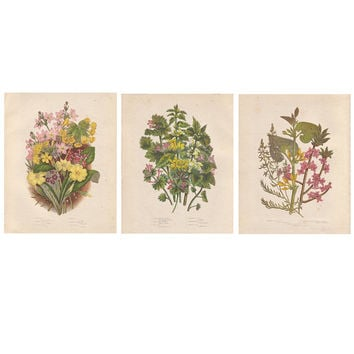 Botanical Wall Decor, Art Print Reproduction, Vintage Flower Art Illustrations, Pink, Yellow, Green Home & Office Wall Decor, SET OF THREE