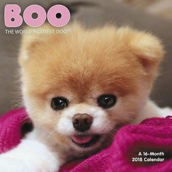 Boo Mini Wall Calendar, Assorted Dogs by ACCO Brands