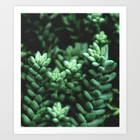 Succulent plants Art Print by VanessaGF