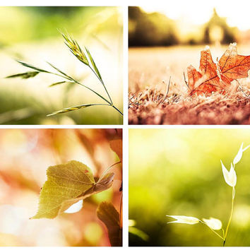 Botanical photography print set 8x10 8x12 autumn leaves photography fall fine art photography nature rustic country cottage wall art pumpkin