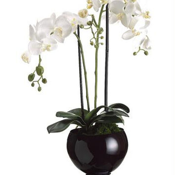 Artificial Potted Plant - Phalaenopsis