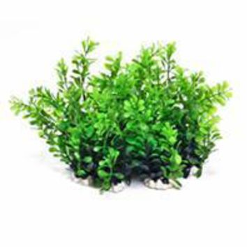 Aquatop Aquatic Supplies - Profit Power Pack Bushy Plant