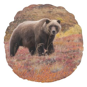 Grizzly Bear Moves Through Autumn Colors In Alaska Round Pillow