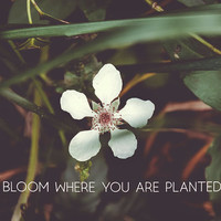 Bloom where you are planted #inspirational by Andrea Anderegg Photography
