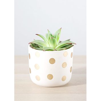 "Izzy Ceramic Flower Pot with Gold Polka Dots - 4.25"" Tall x 5"" Wide"