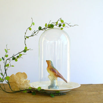 Glass Dome Cloche with Vintage Bird / Large Vignette Display