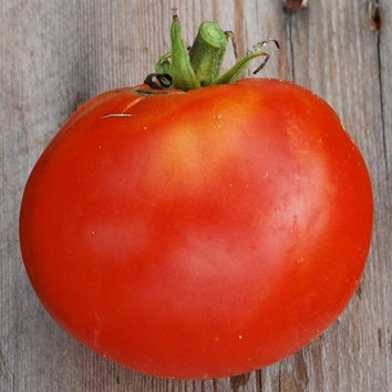20 organic tomato seeds Saint Pierre, very old variety, large fleshy fruit, vigorous and resistant, for a unique vegetable garden!