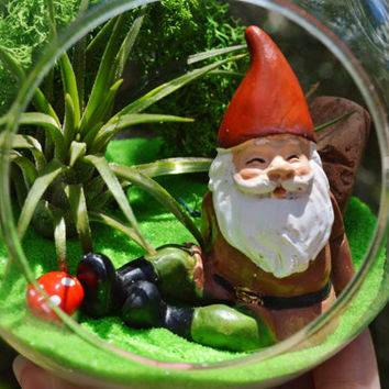 Gnome Terrarium  Kit ~ Small Glass Terrarium ~ Tillandsia Air Plant ~ 4 Gnomes to choose from  ~ Gift Idea ~ Birthday ~ Miniature Garden