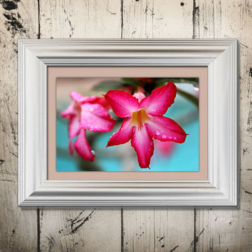 Pink Flowers Floral Aqua TIffany Blue Water Shabby Cottage Chic Artistic Tropical West Palm Beach Florida_8 Nature Photography Print