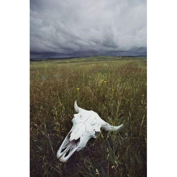 A Lone Bison Skull Nestled In The Grasses Of South Dakota'S Custer State Park