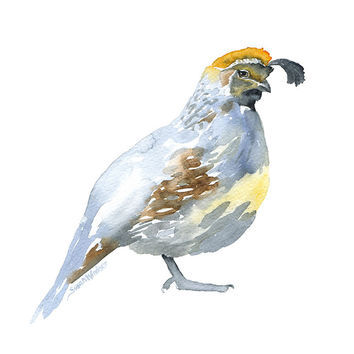 Quail Watercolor