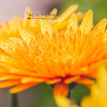 Fall Print,Yellow Flower Print,5x7,8x10,Nursery Print,Flower Photography,Nature Photography,UNFRAMED,Wall Hanging,Rain,Floral Print,Photo