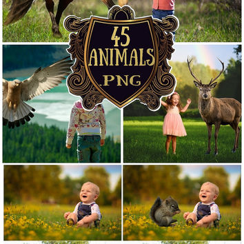 Forest Wild Animal Overlays Transparent PNG Horses overlay Zoo Animals Photoshop overlays  Eagle overlay Dog overlay Instant download png