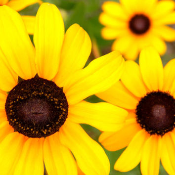 Fine Art Photography, yellow flower, pretty, beautiful, colorful, photography, wall art, home decor, nature photography
