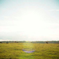 Field Photograph - On the Farm - 11x14 Fine Art Photograph - Cow Photo - Eclectic Photo - Field