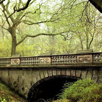 Central Park in Spring - Emerald- New York Photography - Glade Arch - trees - olive leaf moss nature 8x10