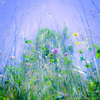 In The Weeds, Photograph, Nature Photography, Fine Art Photo, Purple, Flowers, Floral, Wall Decor, Home Decor, Bed Decor, Bath Decor,