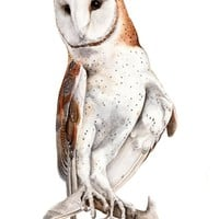 """Barn Owl Watercolor"" - Art Print by JP Lara"