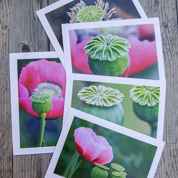 Pink Poppies and Seedpods Photo Greeting Cards - Set of 5 Wildflower Photo Cards for Gardeners and Nature Lovers - Fine Art Photography