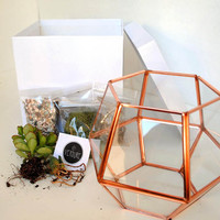 DIY Terrarium kit, Succulent Terrarium, Glass Terrarium, Miniature Garden, Home and Gaden, DIY Gifts