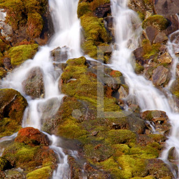 Mossy Waterfall Canvas Wall Art