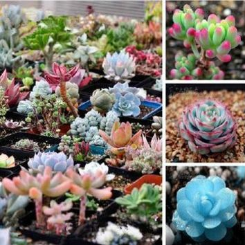 2018 Limited Promotion Outdoor Plants Sementes 20/bag Mix Succulent Seeds Bonsai Plants For Home & Garden Flower Pots Planters
